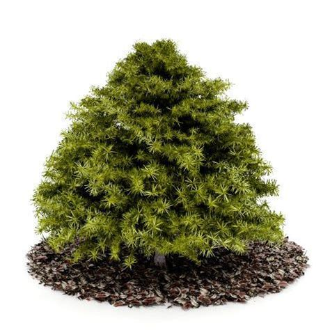 small conifer small green conifer tree 3d model cgtrader com