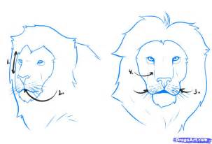 How to Draw a Easy Lion Face