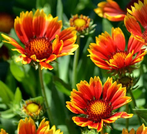 Types Flowers Garden