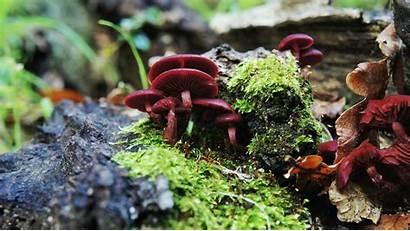 Macro Mushroom Moss Plants Desktop Wallpapers Backgrounds