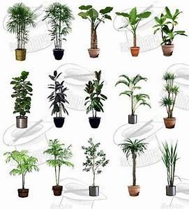 Plantas ornamentales EspacioHogar