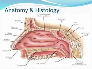 Tumors  U0026 Tumor Like Conditions Of Nasal Cavity