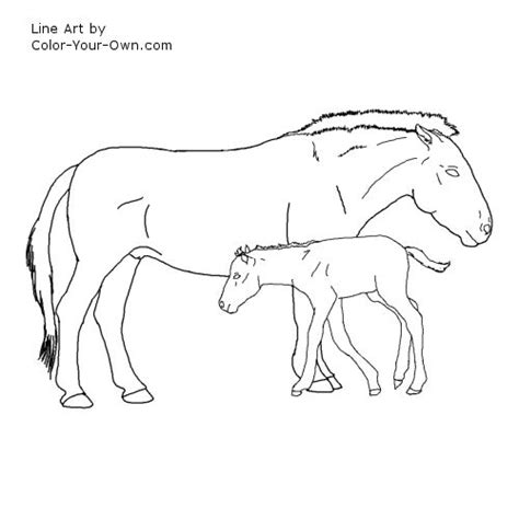 Przewalski Horse Coloring Page