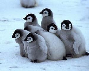 The Real Winners of the Falklands War, Were the Penguins ...