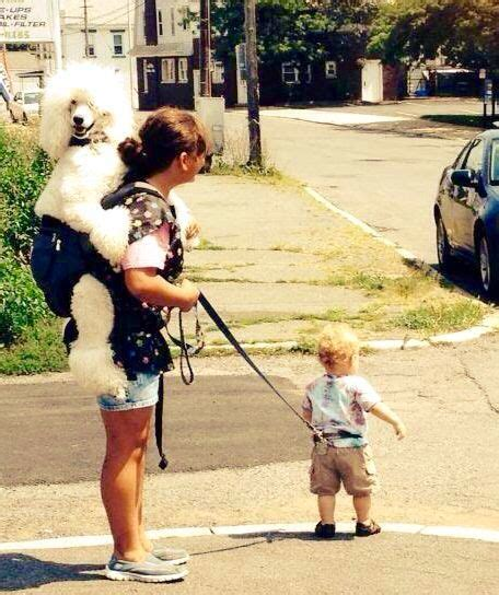 Best Images About DOGS BEING HUMAN On Pinterest Dog