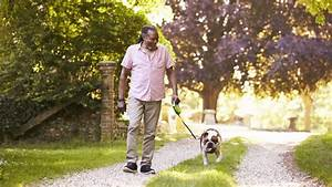 Health, The, Benefits, Of, Dogs, For, Seniors