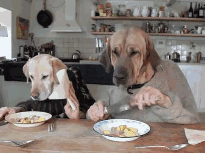dog eating at table dogs with human hands in hoodies 10 gifs to make you lol