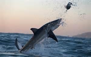 Flying Great White Shark