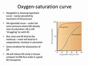 PPT - Example of Tertiary and Quaternary Structure of ...