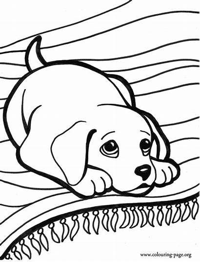 Coloring Puppies Dogs Dog Colouring Printable