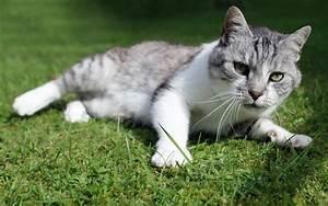 Weißer Wurm Katze : normadenstamm f r immer verloren mmff kapitel 2 potatocat ~ Markanthonyermac.com Haus und Dekorationen