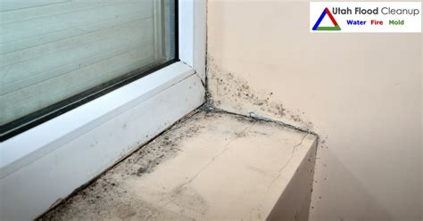 house mold dangers utah flood cleanup