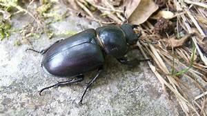 Insecte Qui Mange Le Bois : insecte quelle est l 39 esp ce qui vit le plus longtemps ~ Farleysfitness.com Idées de Décoration