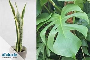 Pflegeleichte Pflanzen Für Die Wohnung : gro e zimmerpflanzen 5 pflegeleichte pflanzen f r ~ Michelbontemps.com Haus und Dekorationen