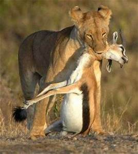 This another example of a prey-predator relationship ...