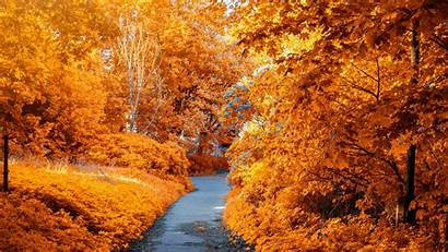 Autumn Fall Wallpapers Foliage Path Park Leaves