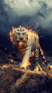 Angry  Raging  White Tiger  1080x1920 Wallpaper