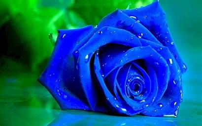 Rose Wallpapers Desktop Flowers