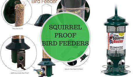Best Squirrel Proof Bird Feeders Reviews Uk