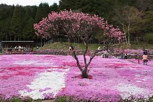 Parterre De Plante : plante couvre sol un tableau de couleurs naturelles dans votre jardin ~ Melissatoandfro.com Idées de Décoration