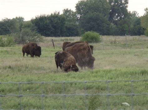 bison wallowing pioneer park lincoln ne magical places