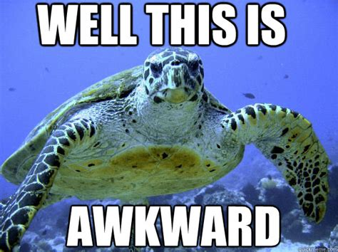 Turtle Memes - well this is awkward awkward turtle quickmeme