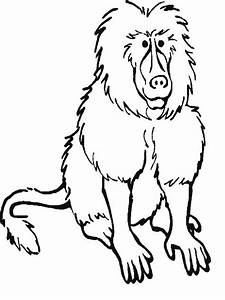 Coloring Pages of Rainforest Animals - Bestofcoloring.com