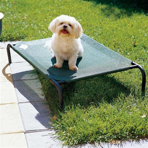 coolaroo elevated pet bed coolaroo raised beds