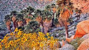Landscapes, Nature, California, Palm, Trees, Land, Yellow