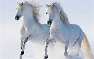 White Horse Walking In The Snow Wallpaper 5120x3200 ...