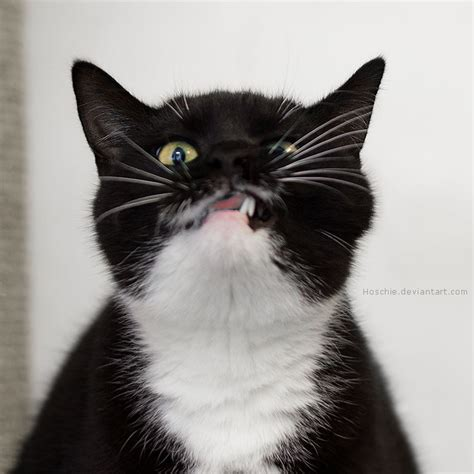 Crazy Cat Images  Reverse Search