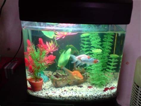 nombre de poisson dans un aquarium mes aquariums