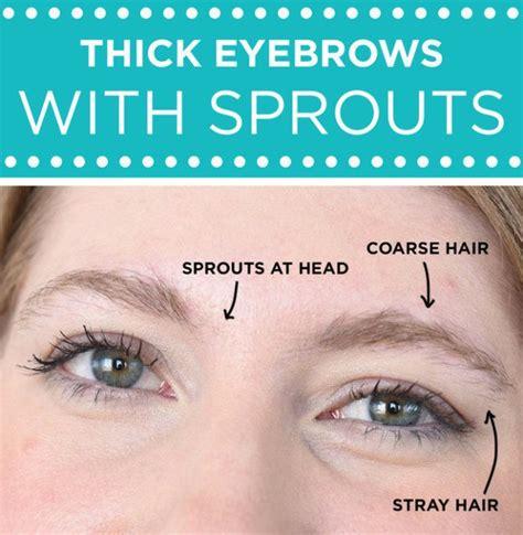 fill  shape transform  eyebrows