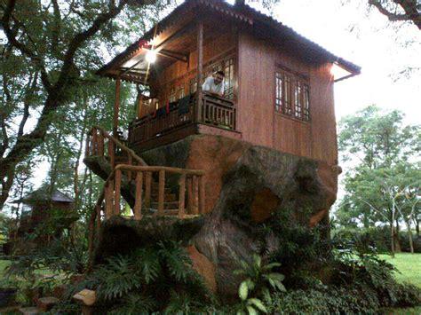 model rumah pohon minimalis indah  unik rumah impian