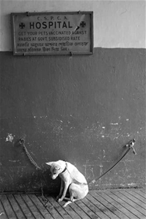 chambre à gaz preuve animaux de compagnie euthanasie de chiens et chats par