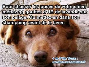 Puce De Chien : l 39 astuce infaillible pour chasser les puces de mon chien ~ Melissatoandfro.com Idées de Décoration