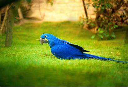 4k Macaw Bird Wallpapers Birds Parrot Backgrounds