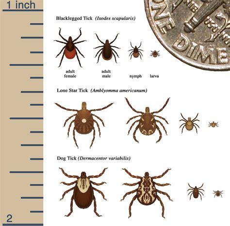 identify tick  nh