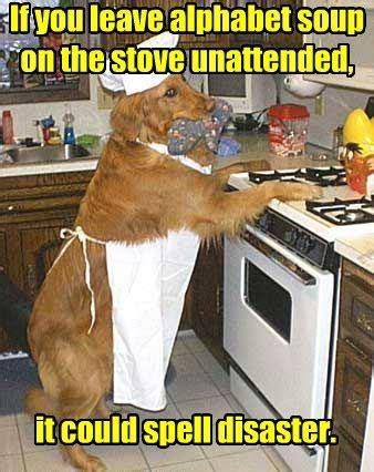 Dog Cooking Meme - dad joke dog justpost virtually entertaining