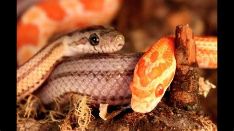 vorsicht niedliche schlangen die meeries youtube