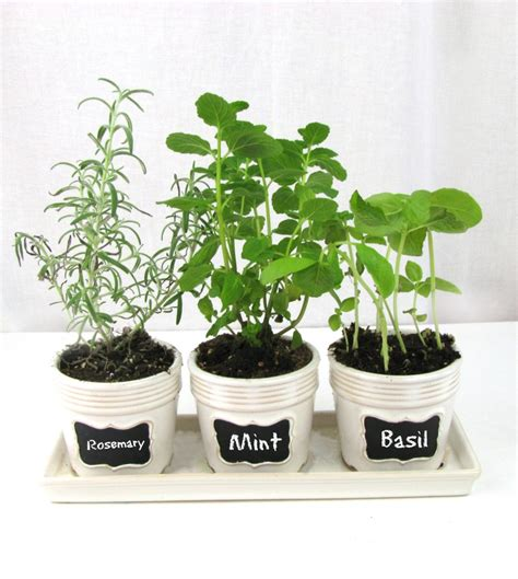 Windowsill Pots For Herbs by Kitchen Windowsill Herb Garden Frugal Upstate
