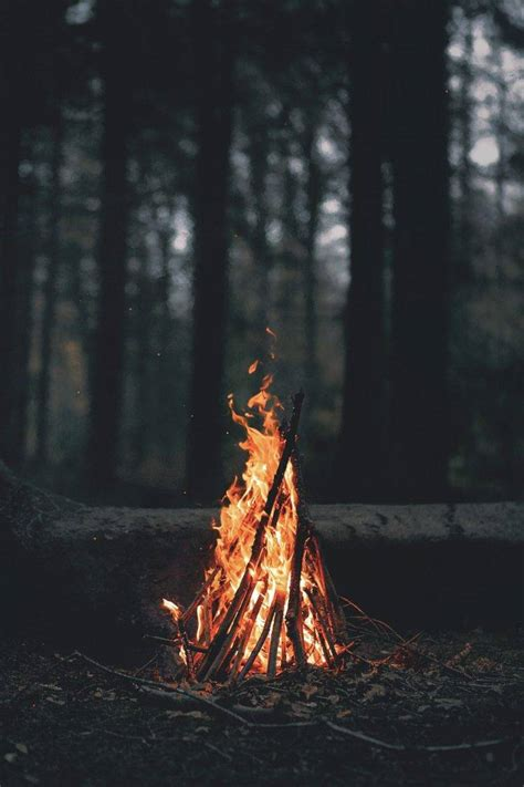 portrait display nature trees forest fire wood