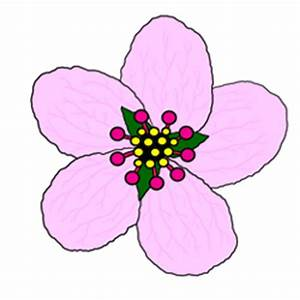 Cherry Blossom Drawing Step by Step Lesson