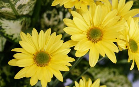 flower color yellow color flowers wallpapers hd wallpapers id 5600