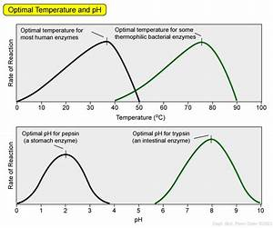 Enzyme Kinetics And Catalysis - Biol 230 Master