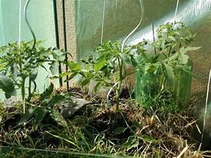 Pflanzen Im Mai : strohballen im mai bio gem se und obst auf strohballen f r den hobbyg rtner ~ Buech-reservation.com Haus und Dekorationen