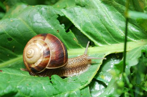 How To Naturally Keep Snails + Slugs Out Of Your Garden