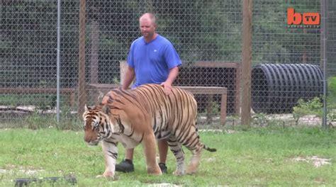 시베리아 호랑이 삼손  삼손 타이거  Samson Tiger  호랑이 사자 불곰 크기 비교