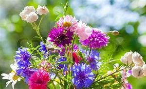 Blumen Im Sommer : bunte sommer wilde blumen blumenstrau in der sonne stockfoto colourbox ~ Whattoseeinmadrid.com Haus und Dekorationen