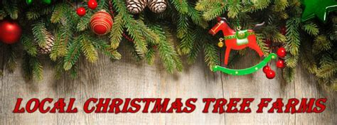 where to get a christmas tree near me local choose your own tree farms bangor me